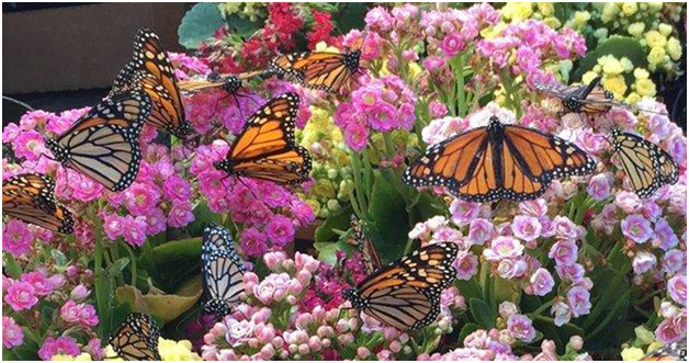 Transform your outdoor space with butterfly gardens for Butterfly garden designs free
