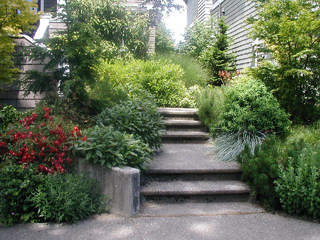 Landscaping With Native Plants : Native plants